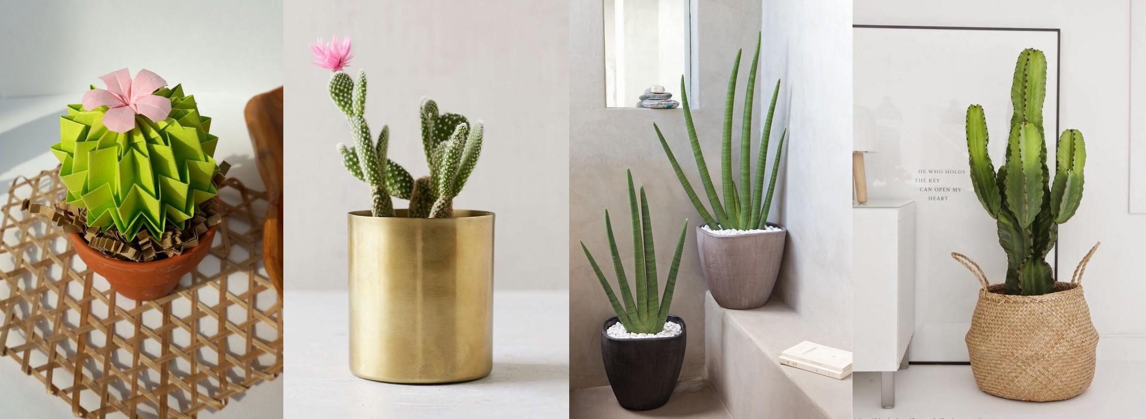 Vert (cactus3).jpg